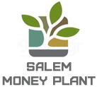 Salem Money Plant